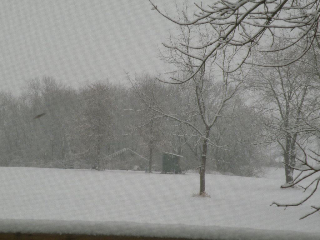 snowe003.jpg